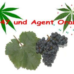 Ein Rotwein Namens Zweigelt und Cannabis Namens Agent Orange