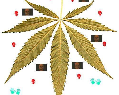 WHO Studien über Kiffer Cannabis