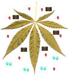 Kiffer Cannabis - WHO Studien - Marihuana und Haschisch zu nicht medizinischen Zwecken